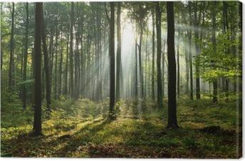 Obraz na płótnie Rano w lesie