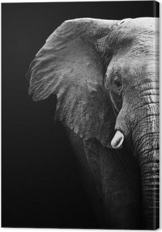 Obraz na płótnie Słoń z bliska