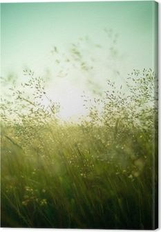 Obraz na płótnie Sucha trawa latem