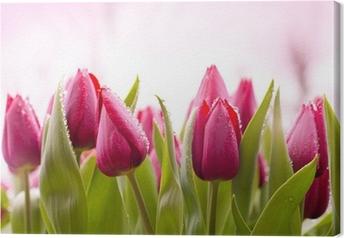 Obraz na płótnie Świeże tulipany z kropli rosy