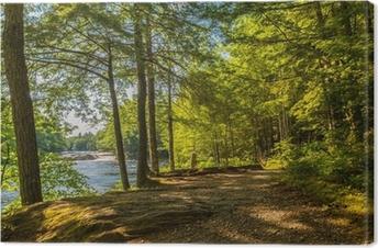 Obraz na płótnie Szlak lasu