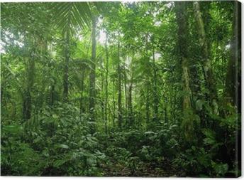 Obraz na płótnie Tropikalne lasy deszczowe krajobraz, amazon