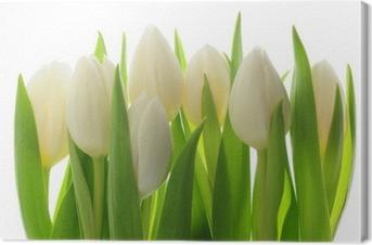Obraz na płótnie Tulipany