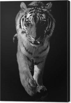 Obraz na płótnie Tygrys czarno bialy