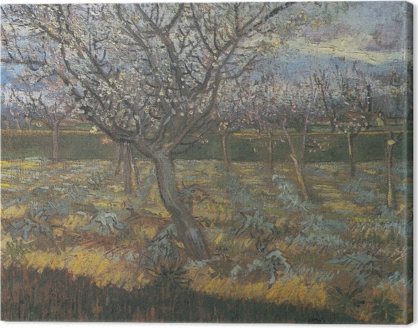 Obraz na płótnie Vincent van Gogh - Kwitnący sad z morelowymi drzewami - Reproductions