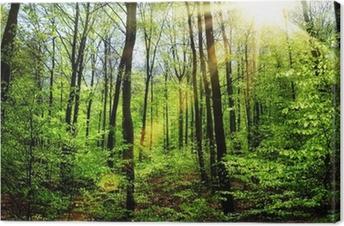 Obraz na płótnie Wiosenne słońce w lesie bukowym