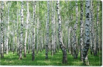 Obraz na płótnie Wiosna brzozowy las z śwież
