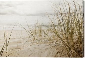 Obraz na płótnie Wysokie trawy na plaży w zbliżeniu