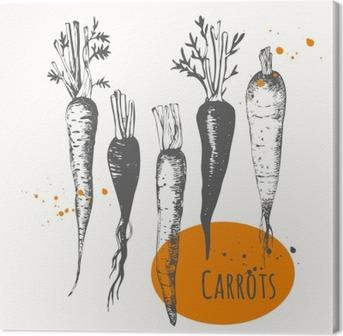 Obraz na płótnie Zestaw ręcznie rysowane marchwi. Czarno-biały szkic żywności.