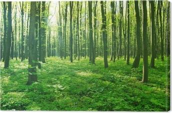 Obraz na płótnie Zieleń lasów