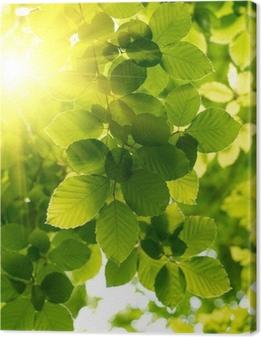 Obraz na płótnie Zielone liście z promień Słońca.