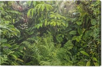 Obraz na płótnie Zielonym tle tropikalnego lasu deszczowego