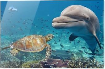 Obraz na szkle Delfin i żółw na podwodne rafy