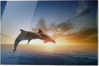 Obraz na szkle Delfiny skoków