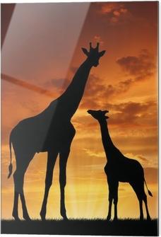 Obraz na szkle Dwie żyrafy w zachodzie słońca
