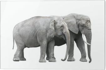 04b343987c93b5 Plakat Dwie kobiety azjatyckie słonie zabawy • Pixers® - Żyjemy by zmieniać