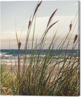 Obrazy premium Dune trawy w świetle poranka :)