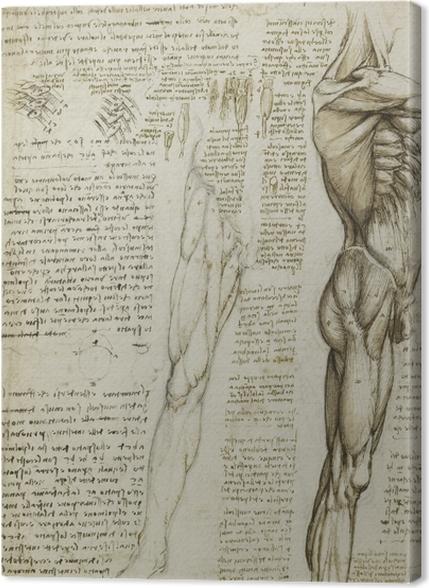 Obrazy premium Leonardo da Vinci - Studium anatomiczne - Reprodukcje