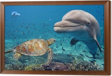 Rámovaný obraz na plátně Delfín a želva pod vodou na útesu