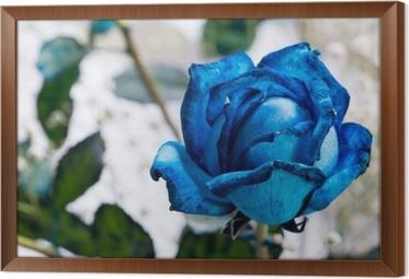 Rámovaný obraz na plátně Modrá růže