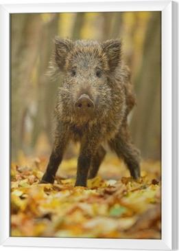 Obraz na płótnie w ramie Dzika świnia