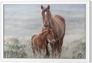 Obraz na płótnie w ramie Dzikie konie