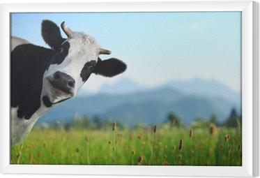 Obraz na płótnie w ramie Krowa
