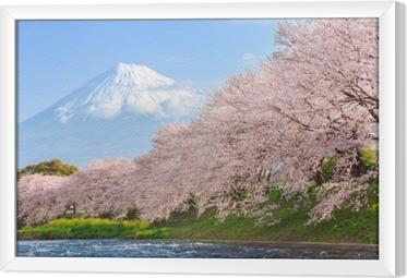 Obraz na płótnie w ramie Kwiaty wiśni lub sakura i góry fuji w tle