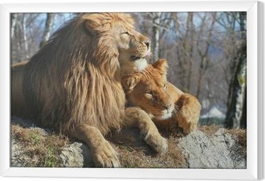 Obraz na płótnie w ramie Lew i lwica