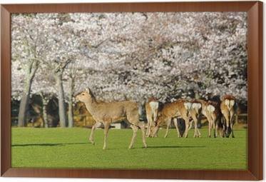 e2b5ecc5296d0 Fototapeta Pełne Jeleń w Nara Park • Pixers® - Żyjemy by zmieniać