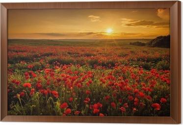 Obraz na płótnie w ramie Pole makowe o zachodzie słońca