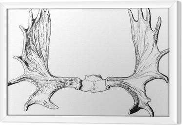 Obraz na płótnie w ramie Poroże łosia