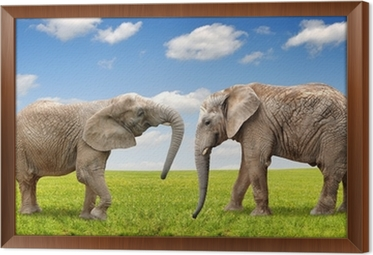 0ddd47dd47ae8c Fototapeta Turysta zabawy z jazdy na słoniu • Pixers® • Żyjemy by ...