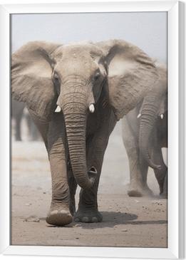 Obraz na płótnie w ramie Stado słoni