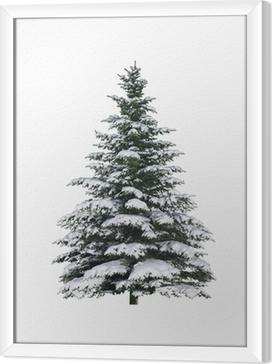 Obraz na płótnie w ramie Świerk w śniegu