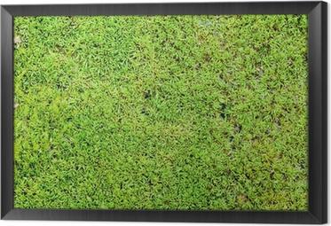 Obraz na płótnie w ramie Zielony mech tle