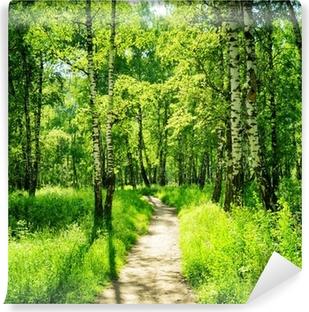 Omyvatelná Fototapeta Březovém lese za slunečného dne. Zelené lesy v létě