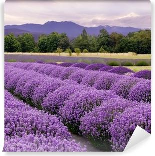 Omyvatelná Fototapeta Lavender Farm v Sequim, Washington, USA