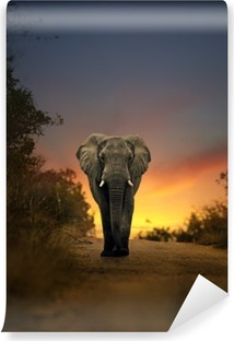 Papier peint vinyle Africain éléphant marchant au coucher du soleil