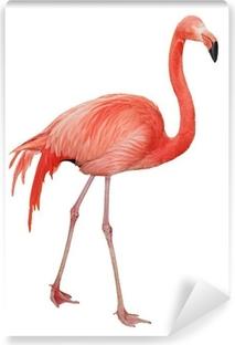 Papier peint vinyle American Flamingo découpe
