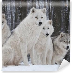 Papier peint vinyle Arctic Wolf Pack