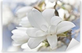 Papier Peint Autocollant Belle fleur de magnolia