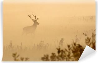 Papier peint autocollant Cerfs rouges avec de grands bois se dresse sur le pré matin brumeux