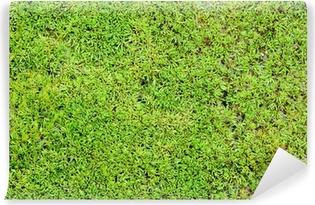 Papier peint autocollant Fond vert mousse