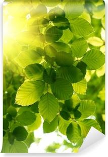 Papier peint autocollant Les feuilles vertes avec rayon de soleil