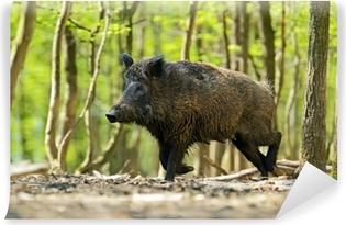 Papier Peint Autocollant Wild boar
