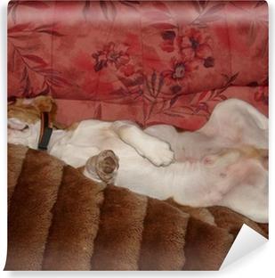 Papier peint vinyle Beagle détendre chien