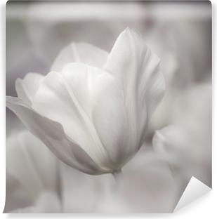 Papier peint vinyle Beaux-Arts de close-up Tulipes, floue et nette