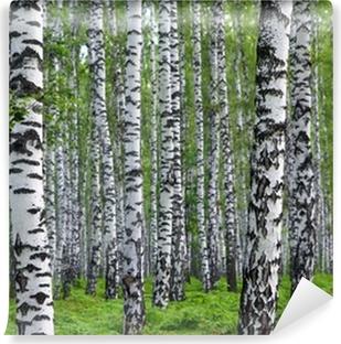 Papier Peint Vinyle Belle forêt de bouleaux d'été
