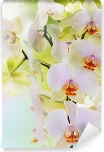 Papier peint vinyle Belles fleurs Orchid.Beauty.Flora japonais